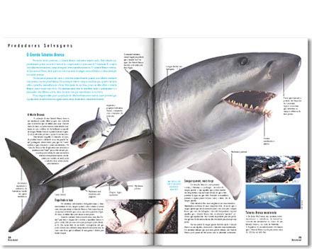 revista reino animal